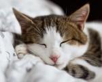 Los mejores estados para el insomnio